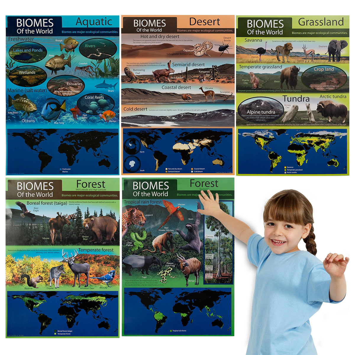Habitat Bulletin Board Set
